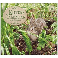 Kittens 2020 Wall Calendar by Legacy WCA53186