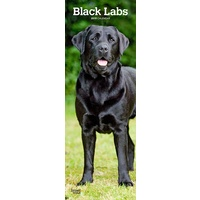 2019 Calendar, Black Labs Slimline Wall Calendar by Browntrout, Postage Included