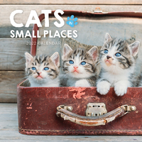 2020 Cats in Small Places Square Wall Calendar by Paper Pocket 17791