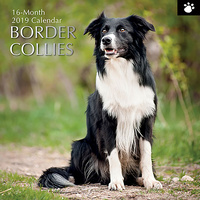 Border Collies 2019 Wall Calendar (Gifted Stationery) Free Postage