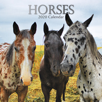 Horses 2020 Square Wall Calendar by Gifted Stationery