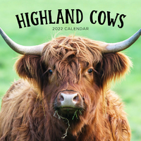 2021 Calendar Highland Cows Square Wall Calendar by Paper Pocket 17319