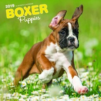 Boxer Puppies 2019 16-Month Square Wall Calendar by Browntrout
