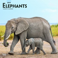 Elephants 2019 16-Month Square Wall Calendar by Browntrout