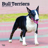 Bull Terriers 2020 Square Wall Calendar by Browntrout