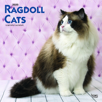 Ragdoll Cats 2020 Square Wall Calendar by Browntrout