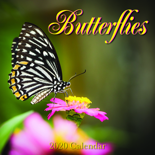 2020 Butterflies Square Wall Calendar by Bartel RB019