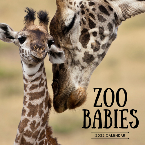 Zoo Babies 2019 Wall Calendar by Paper Pocket, NEW, Free Post
